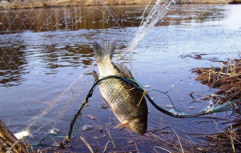 Ловим рыбу в своем пруду