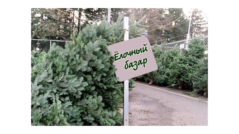 В российской столице открылись елочные базары