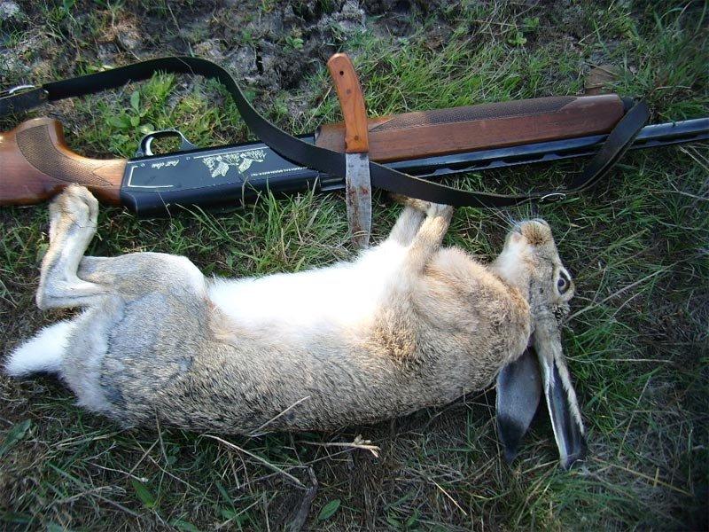 Как ловить зайцев в поле