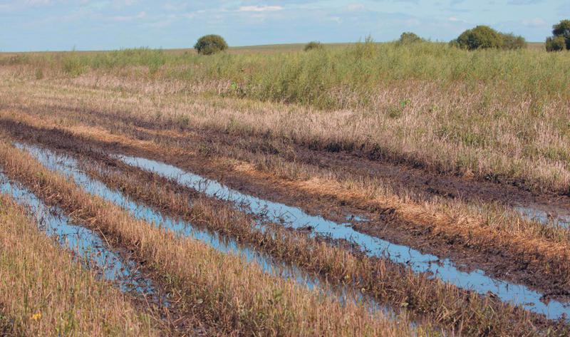 Омским аграриям погода не дает работать в полную силу